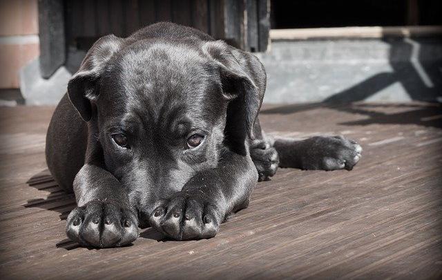 4 tips til hvordan du slipper af med hundehår i hjemmet